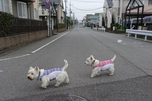 ichiichihoukokusoudansuruyatu5.jpg