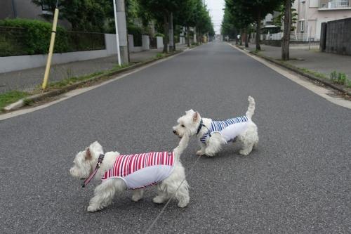 ichiichihoukokusoudansuruyatu6.jpg