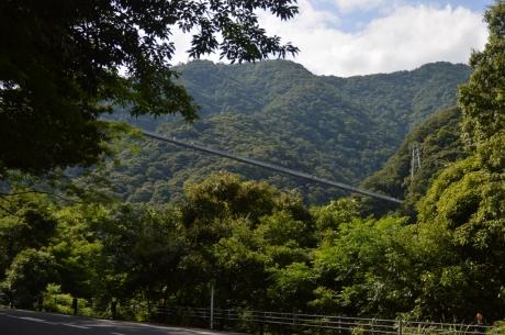 10見えて来た照葉の大吊橋