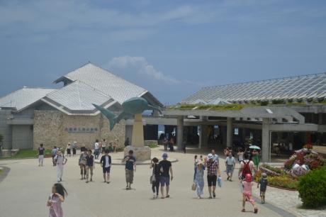 8きたぜ美ら海水族館