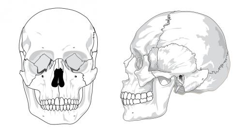 skull-41553_1280.png