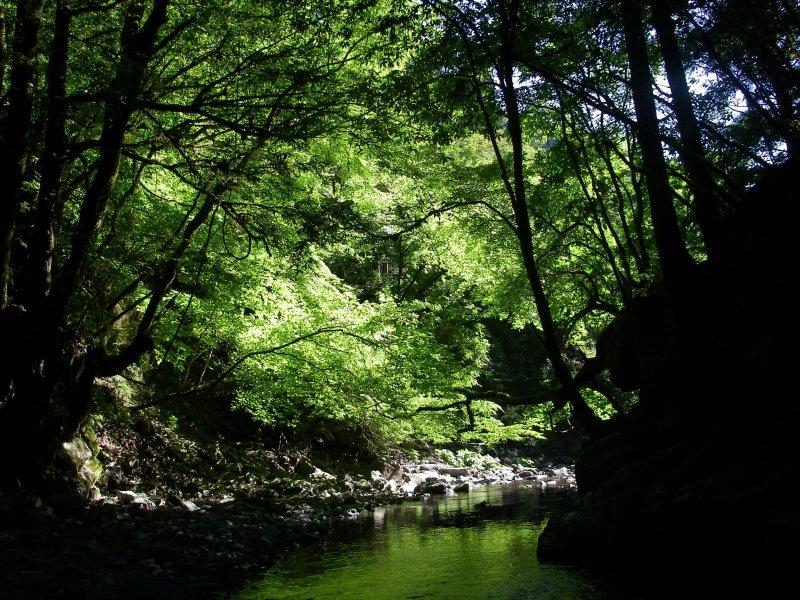 kaikawa