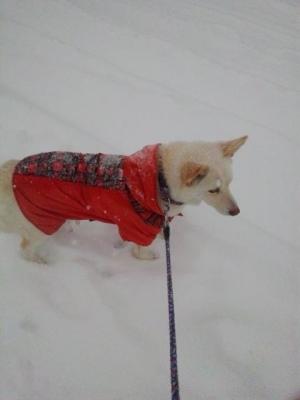 雪の日散歩