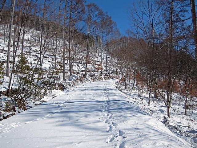 市民の森冬の風景