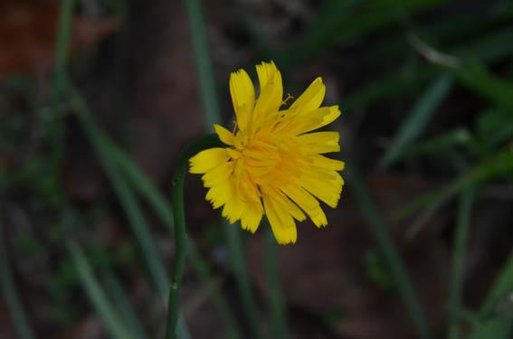 butana_20150513_DSC_8689.jpg
