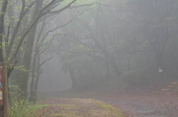 fog_20150404_DSC_5176.jpg