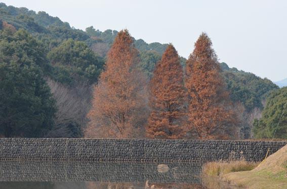 tree_20141224_DSC_8413.jpg