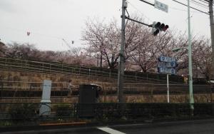 15 3 29asukayama2 (2)
