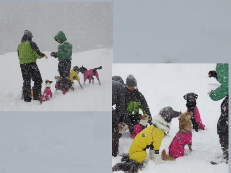 🎶 雪 遊び
