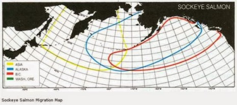 sockeye map (1)