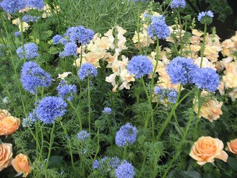 アンデルセンの庭 (4)