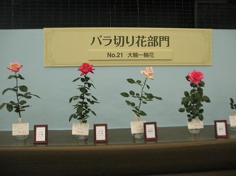 切花 (2)