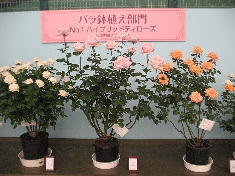 鉢植え (1)