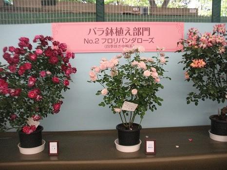 鉢植え (2)