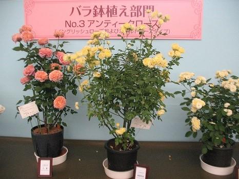 鉢植え (3)