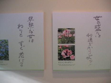 風のガーデン (3)