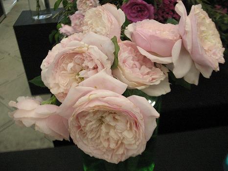 香りのバラ (1)
