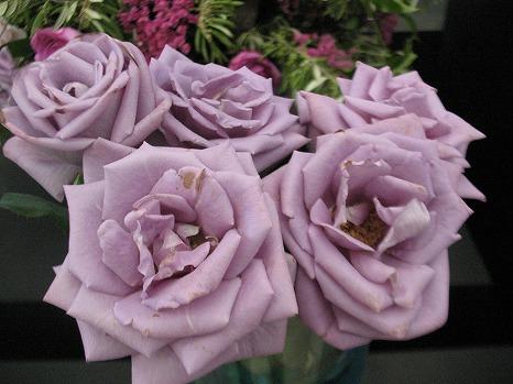 香りのバラ (3)