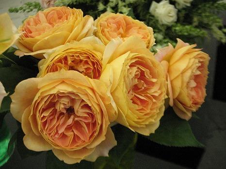 香りのバラ (5)