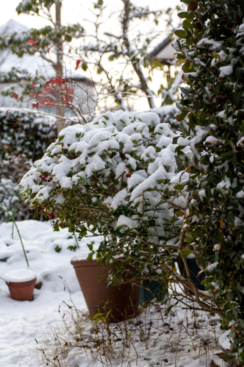 初雪、初写真!!