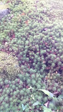 長府毛利邸の苔