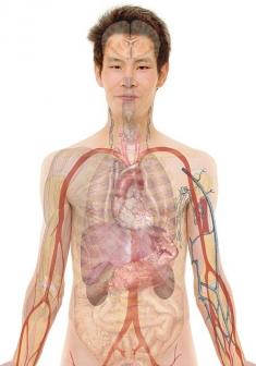 anatomy-254129_640.jpg