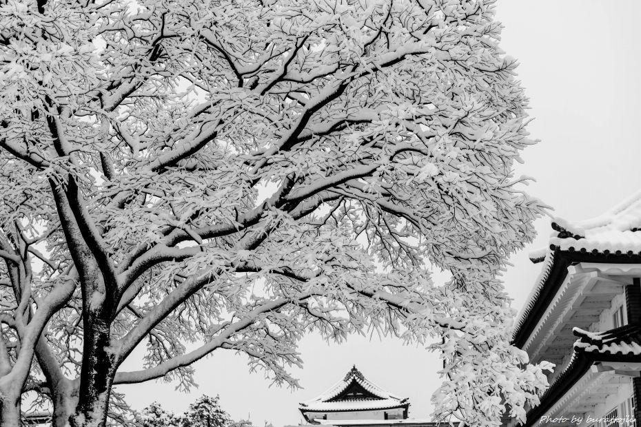 2015.01.01金沢城公園9