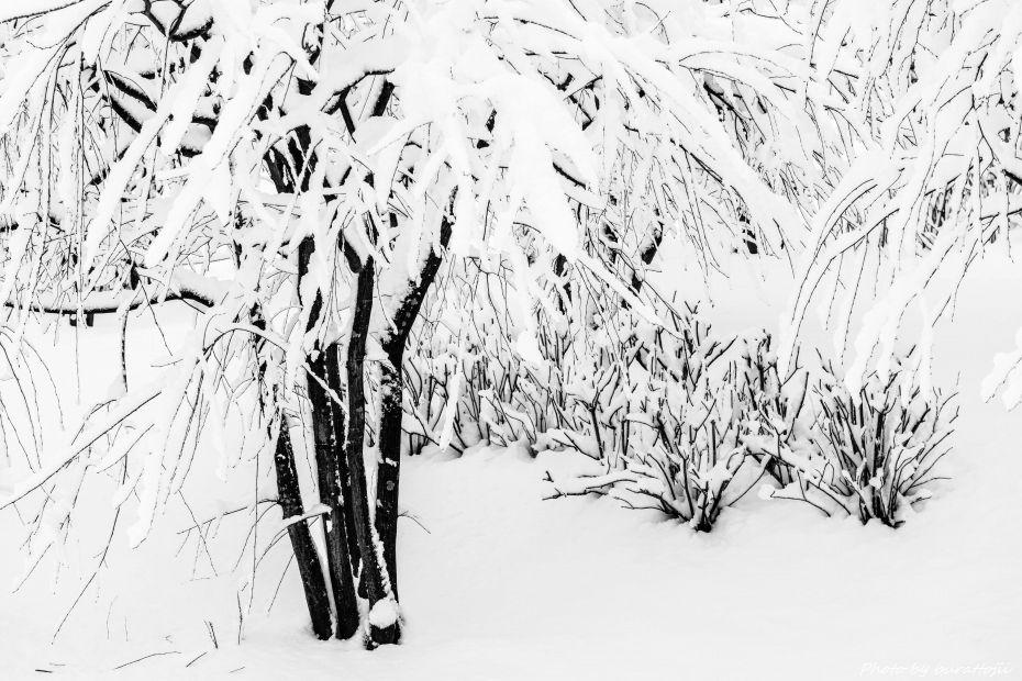 2015.01.01金沢城公園8