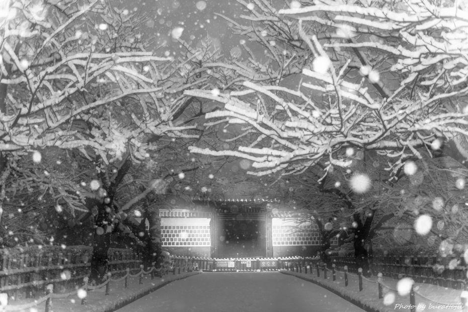 2015.01.01金沢城公園4