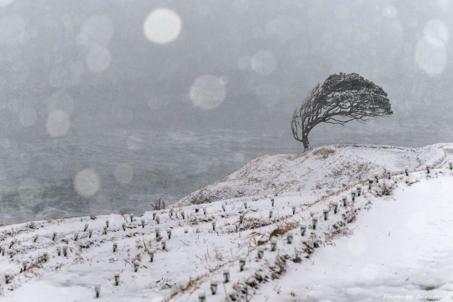 2015.01.02白米千枚田の雪景色5