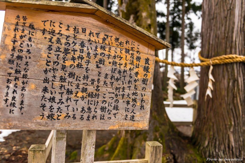 2015.02.08大野良縁の樹2