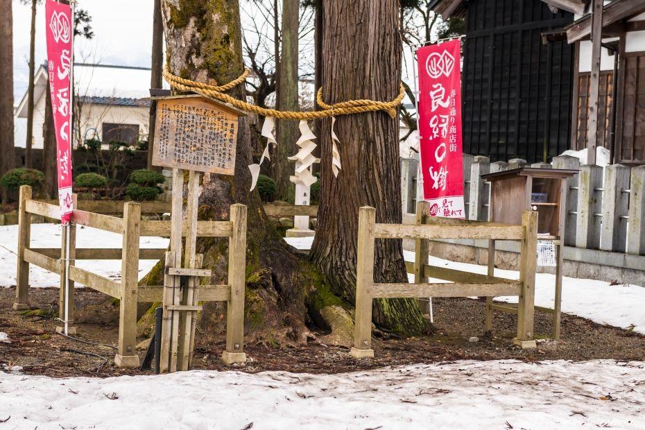2015.02.08大野良縁の樹1