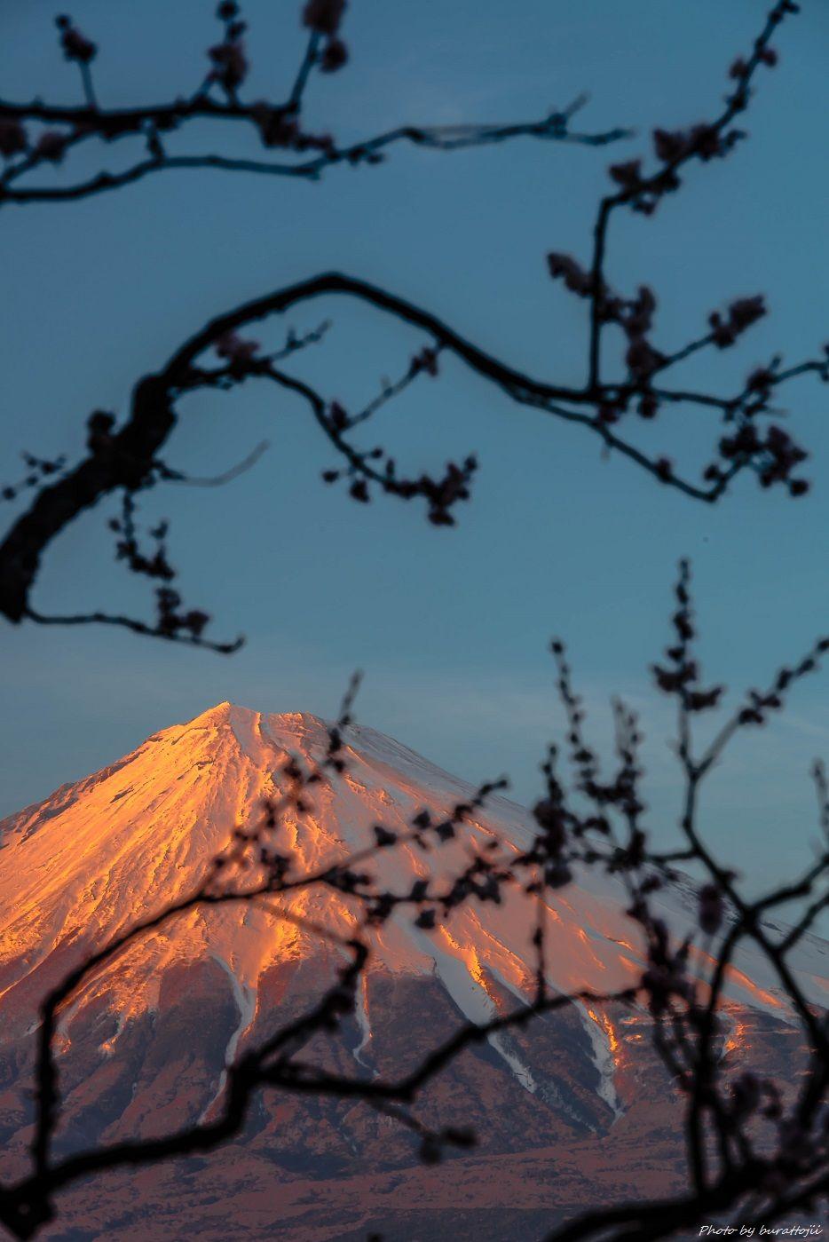 2015.03.04岩本山の梅と富士山12