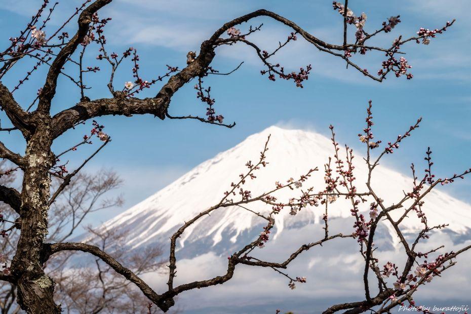2015.03.04岩本山の梅と富士山10