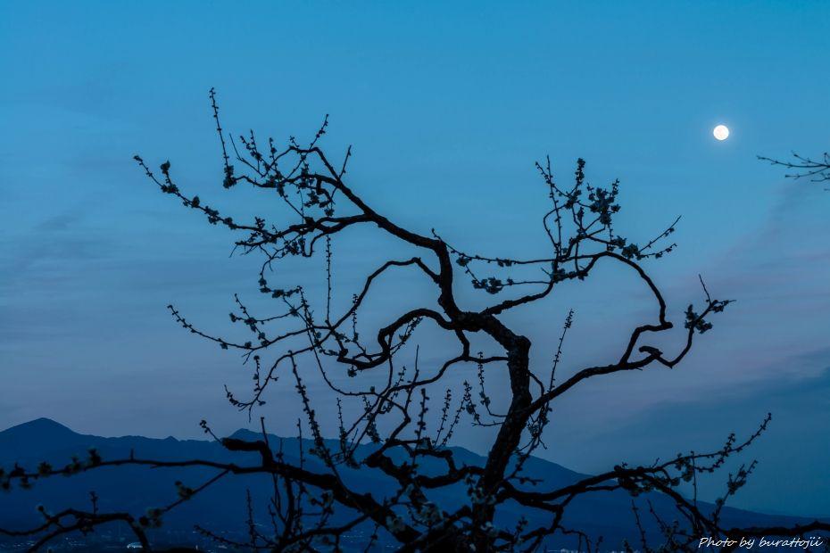 2015.03.04岩本山の梅と富士山11