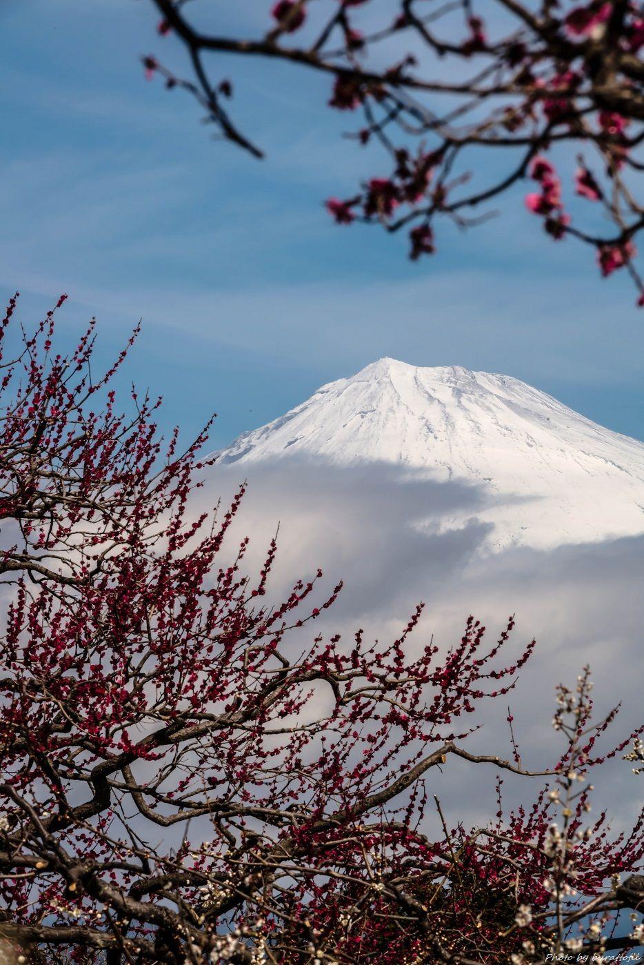 2015.03.04岩本山の梅と富士山8