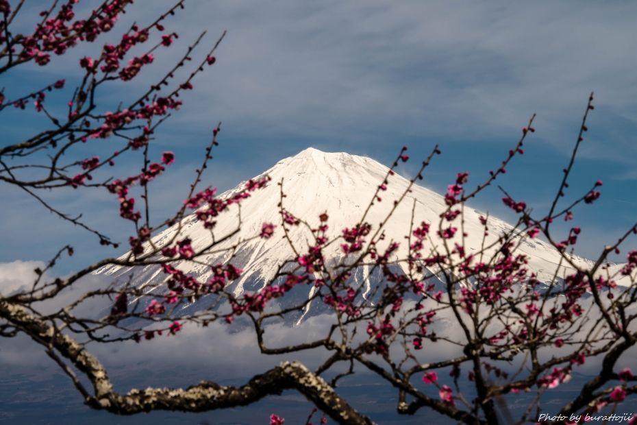2015.03.04岩本山の梅と富士山9