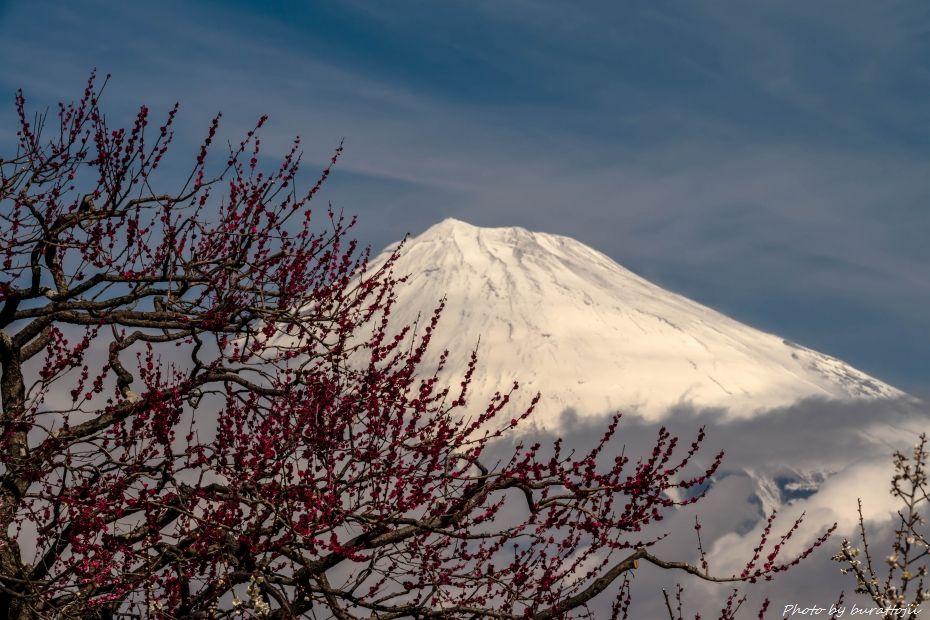 2015.03.04岩本山の梅と富士山7