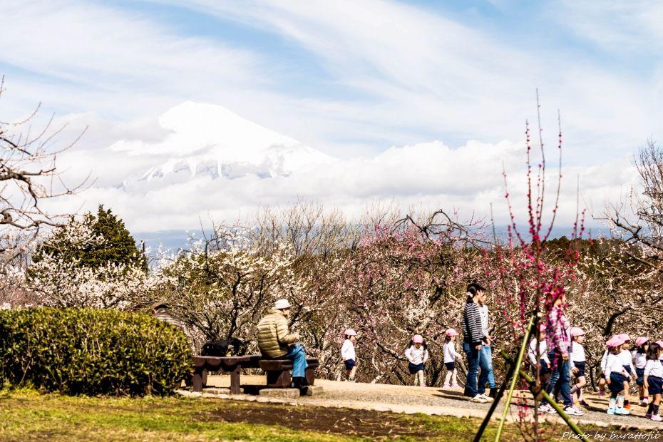 2015.03.04岩本山の梅と富士山6