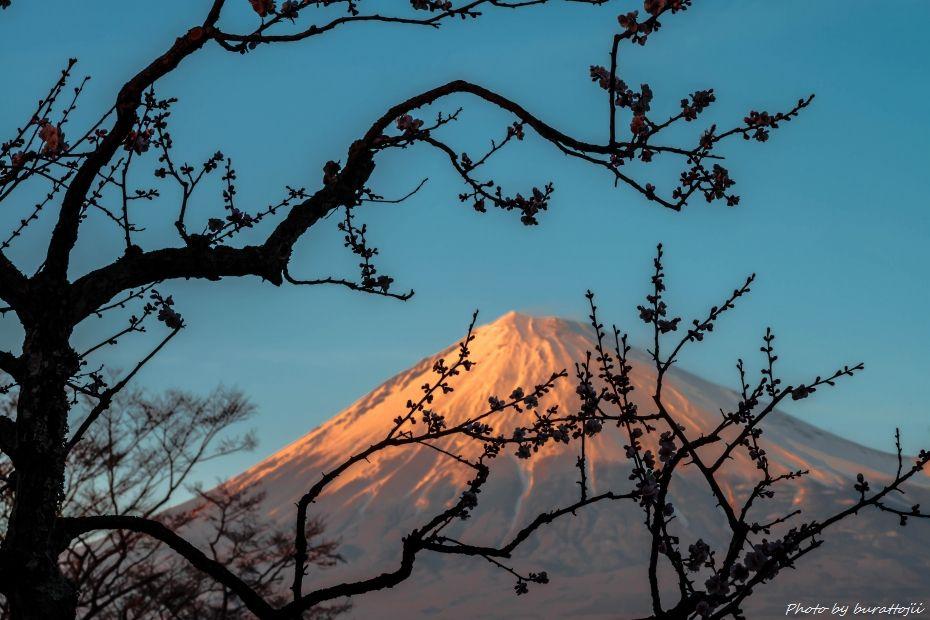 2015.03.04岩本山の梅と富士山1