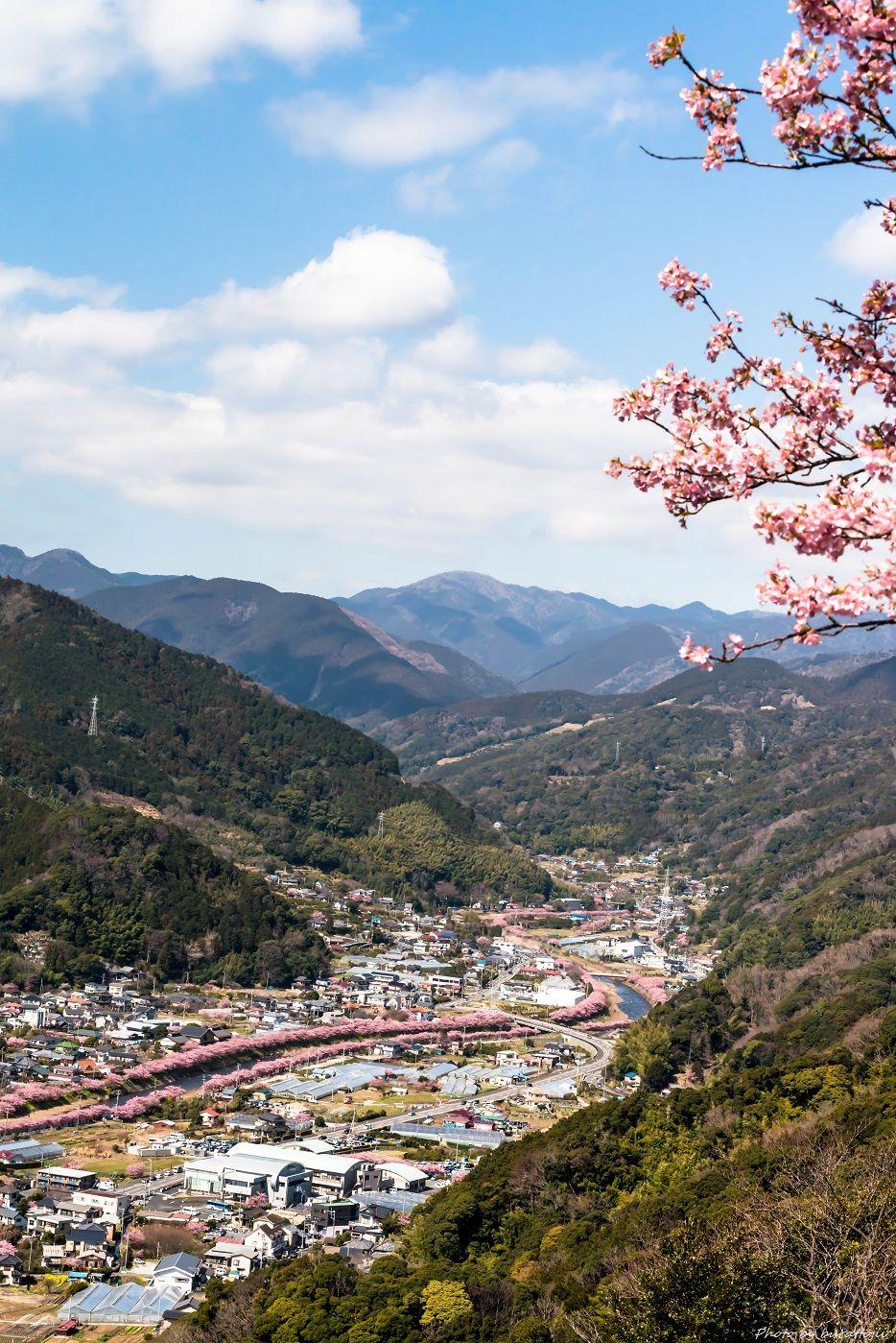 2015.03.05河津桜3