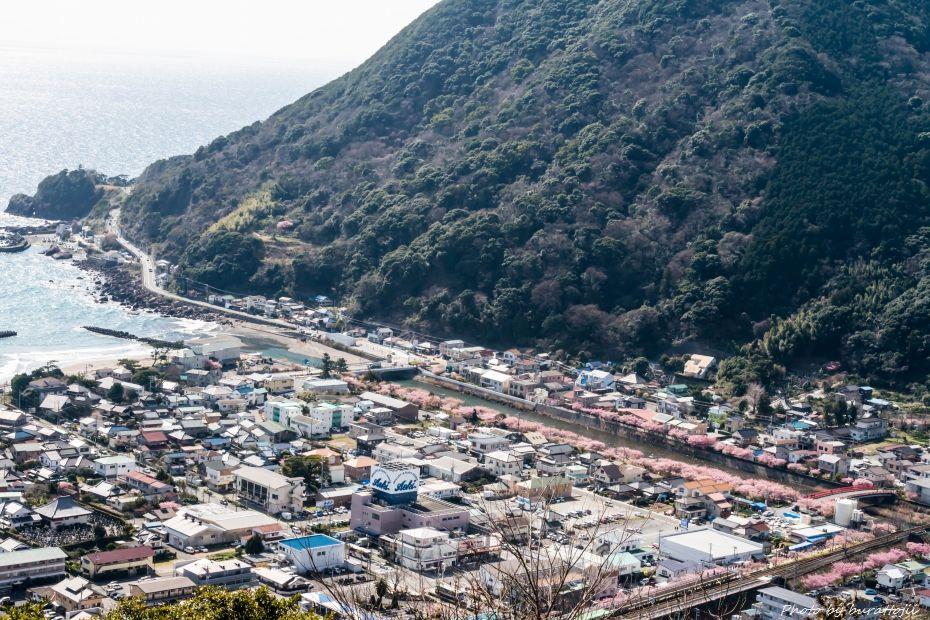 2015.03.05河津桜1