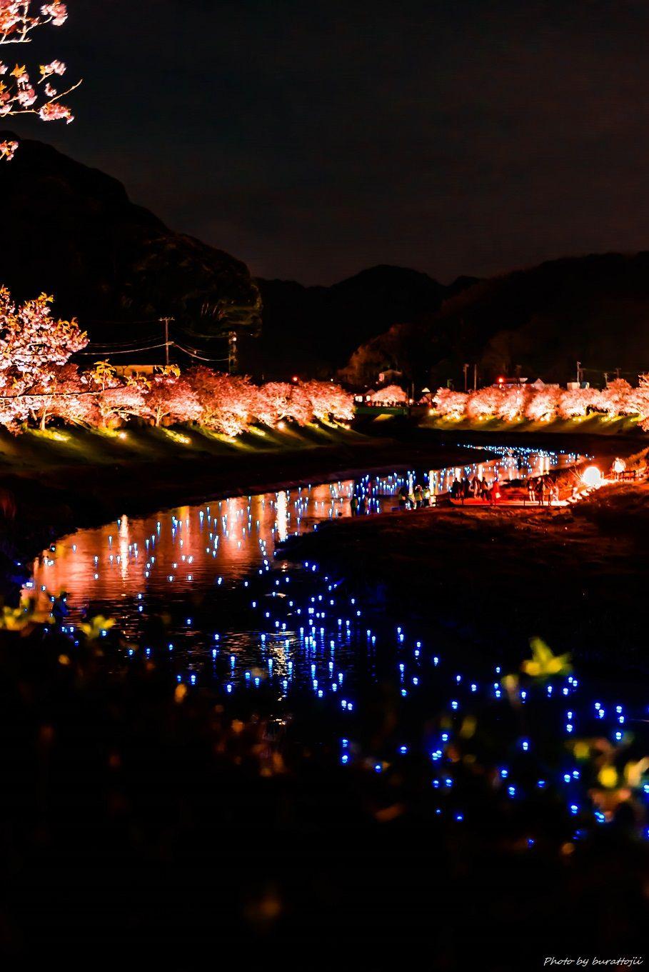 2015.03.05夜桜☆流れ星10
