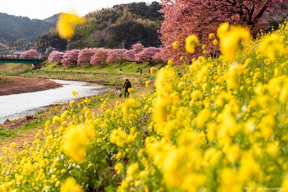 2015.03.05夜桜☆流れ星2