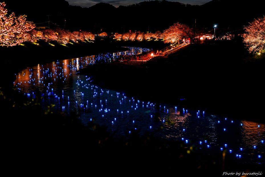 2015.03.05夜桜☆流れ星1
