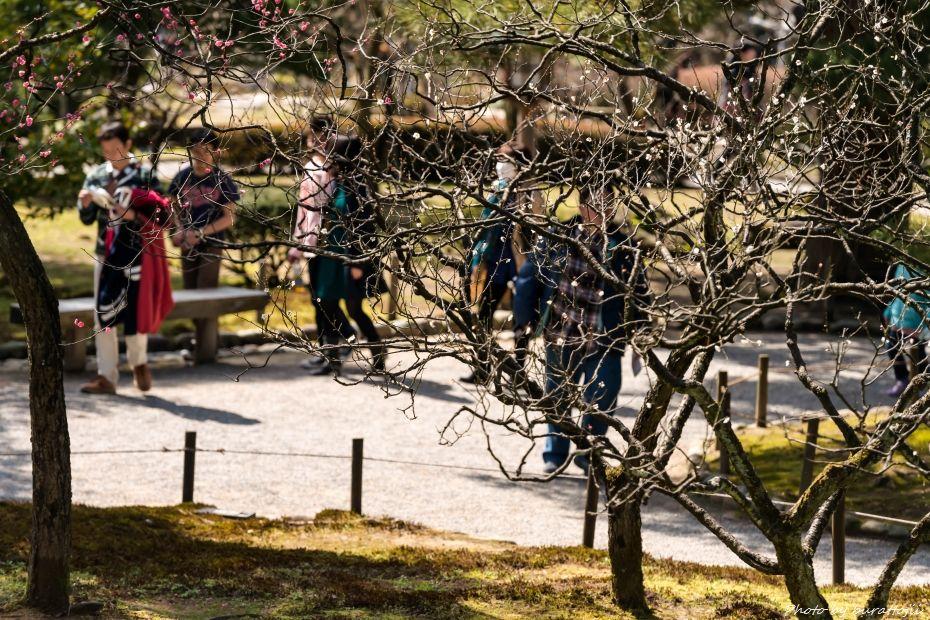 2015.03.15兼六園6