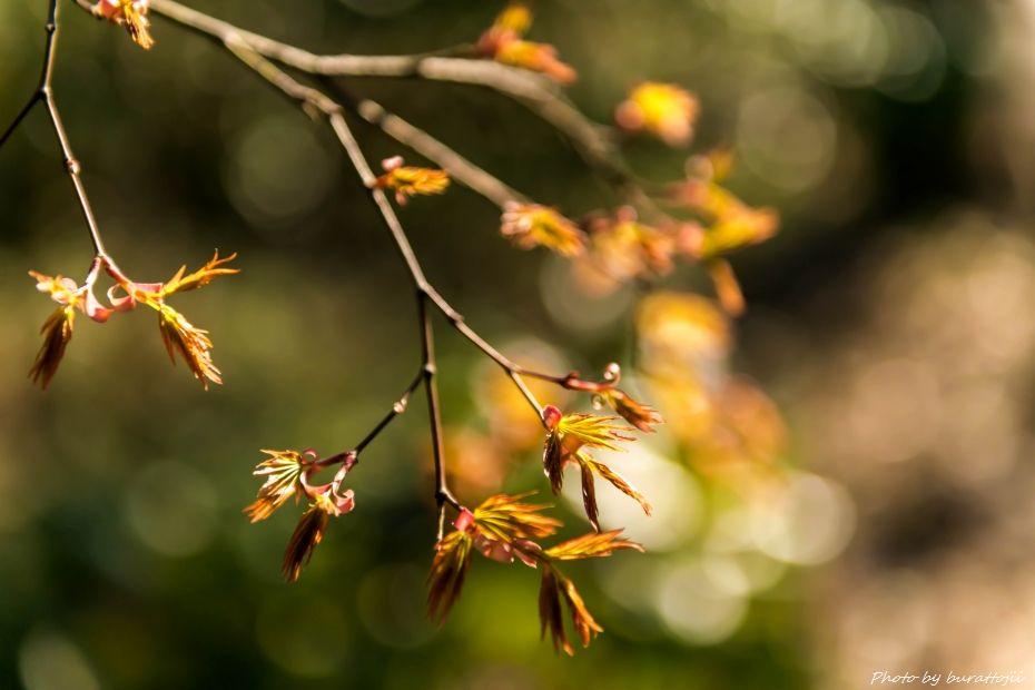 2015.03.27玉泉院丸庭園8
