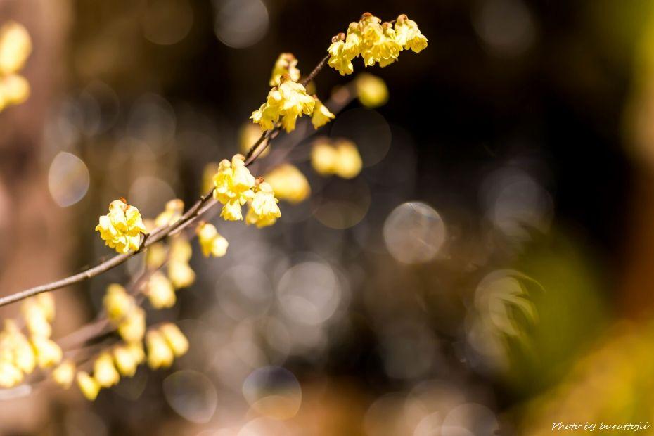 2015.03.27玉泉院丸庭園6