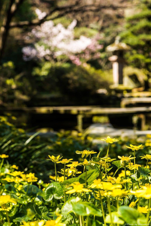 2015.03.28尾山神社6