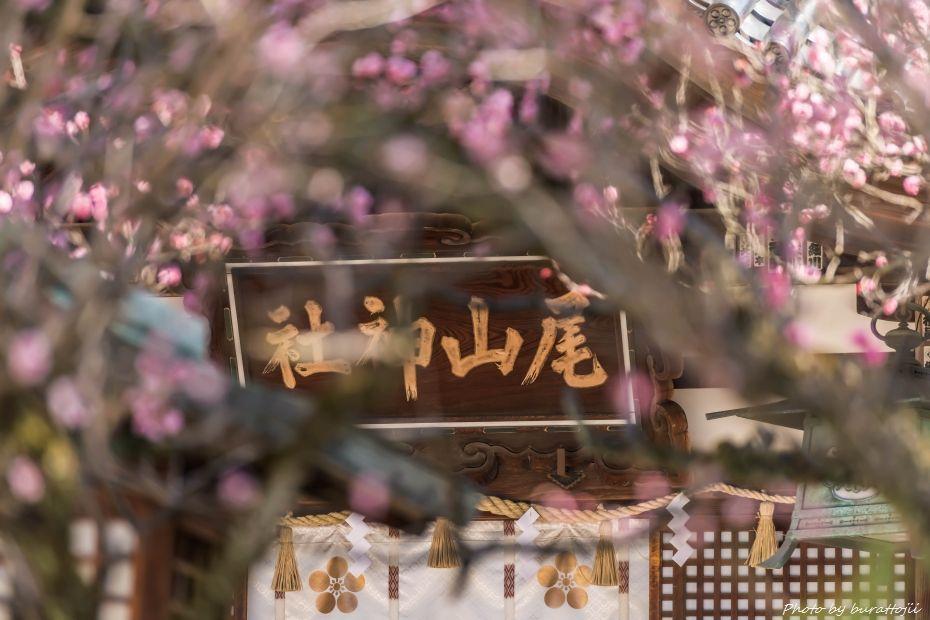 2015.03.28尾山神社3